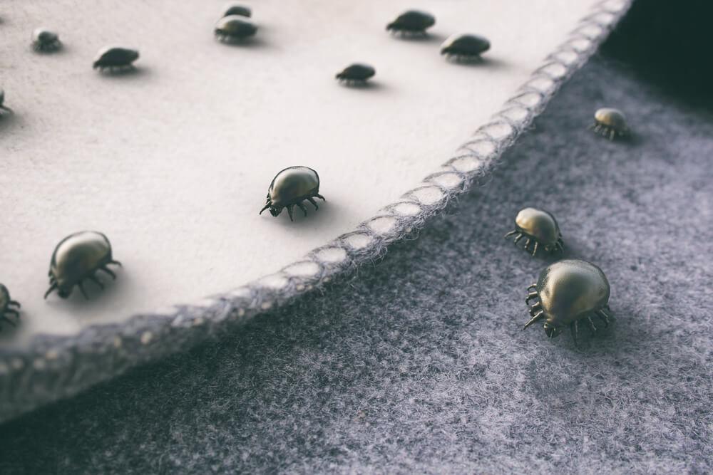 Imagem de ácaros em cima de um colchão.