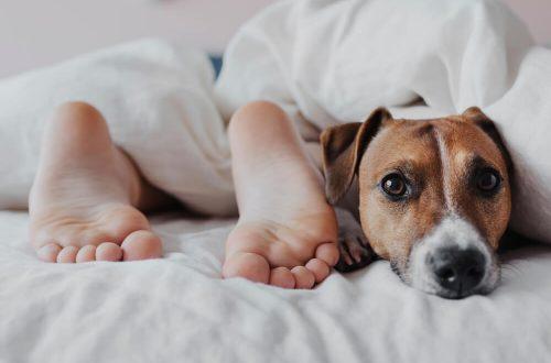 A imagem mostra os pés de uma pessoa e ao lado um cachorrinho. Ambos estão deitados em uma cama.